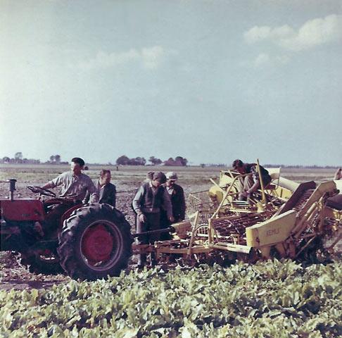 Bietenrooien 1959