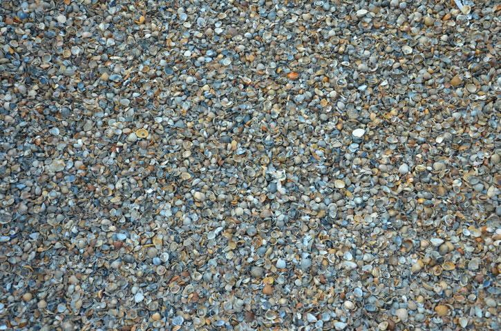 Schelpen|Te gebruiken voor een schelpenpad maar ook tegen vochtoverlast in woon- en werkruimten.
